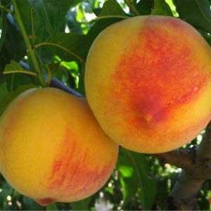 Los melocotones tienen un alto contenido en carotenos.