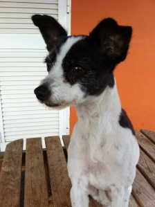 Buscamos al dueño de esta perrita encontrada en las cercanías del Restaurante La Playita.