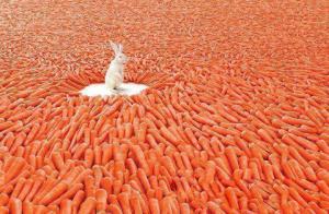 No sólo de zanahoria debe vivir el conejo.
