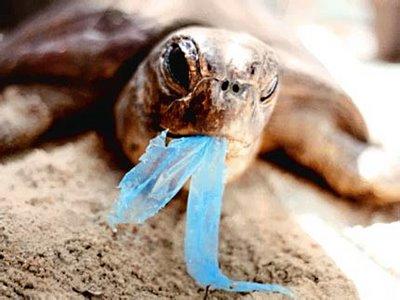Peces y otros animales confunden el plástico con comida y lo ingieren.